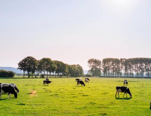 Le associazioni animaliste e ambientaliste e il resto del mondo