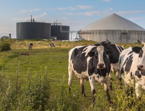 Da consumer a prosumer: una rivoluzione agricola è possibile